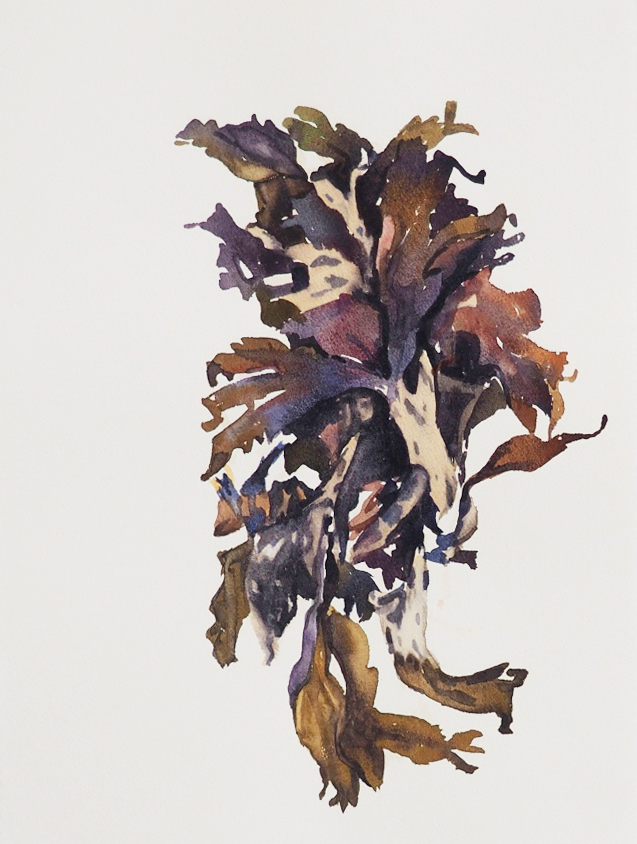 seaweed4