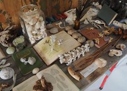 Natural History, table