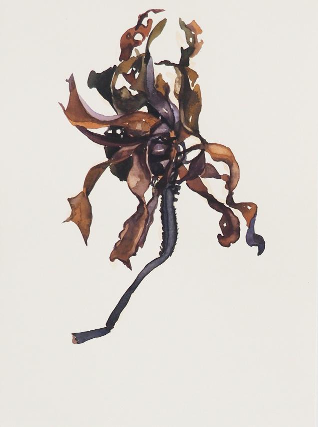 seaweed13