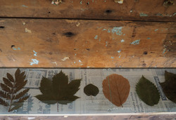 Leaf Collection 2