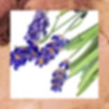 ASB_HomePage_Lavendar_Web.png