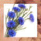 ASB_HomePage_Cornflower_Web.png