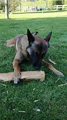 matériel canin