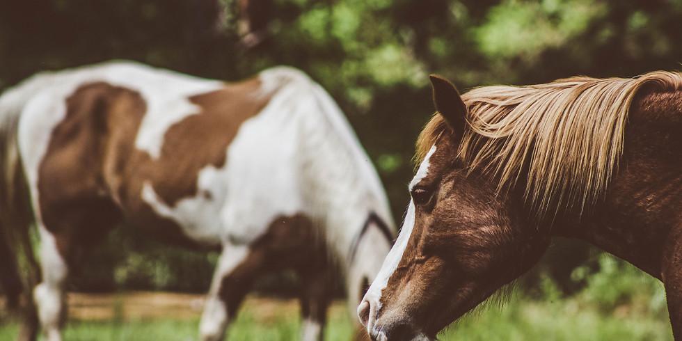 Beginner Horsemanship I Camp