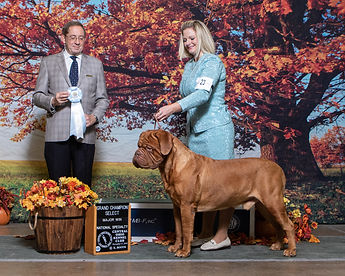 Grand Champion Select Dog.jpg