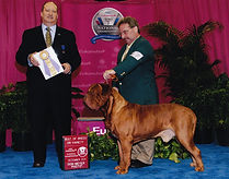 Dogue de Bordeaux Society of America