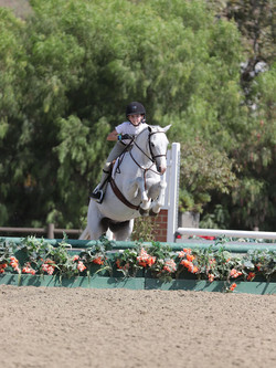 pony and rider at show