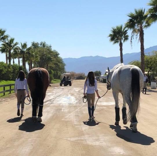 desert horse show