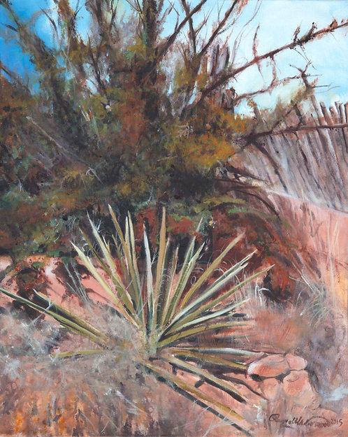 Yucca San Isabel at Lomita