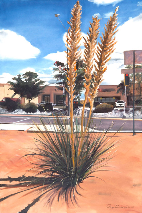 Llano Street Yucca