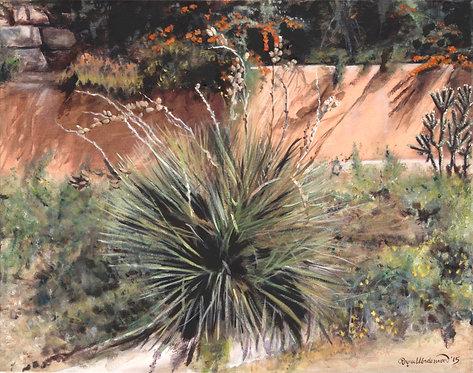 Yucca at Lomita