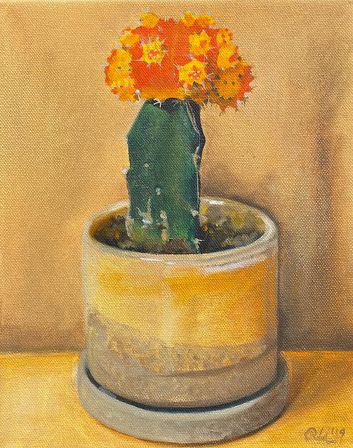 Orange Yellow Cactus