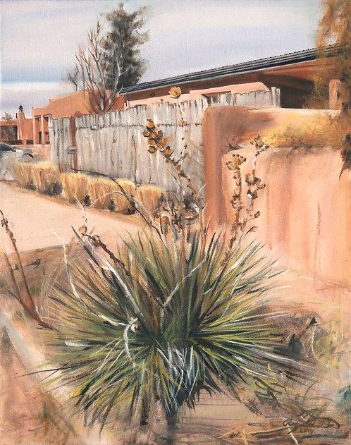 Yucca at Lomita Winter