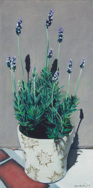 Lavender at Adorn