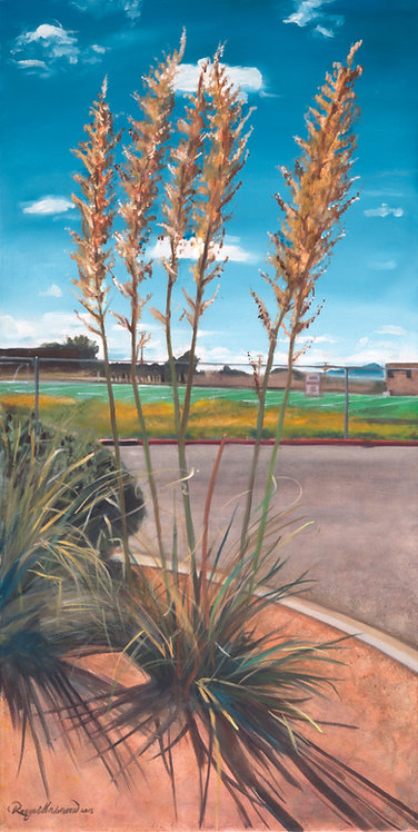 Yucca at DeVargas Middle School