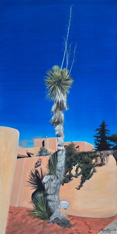Yucca at Galisteo and Alicante