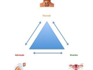 """Trio : Suprarenalele × Tiroida × Ovarele : """"Cum toate sunt Conectate """""""