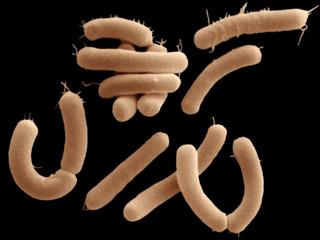 Bacteriile, Intestinul și Creierul