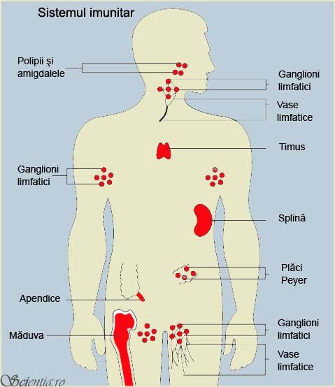 papilloma alla vescica benigno toxine botulique age