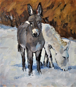 Muswell Donkeys