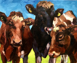 Lacey's Cows