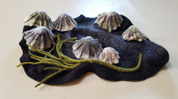 Limpets & Seaweed on a Rock