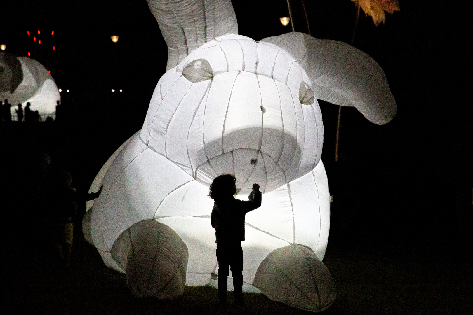Following the White Rabbit