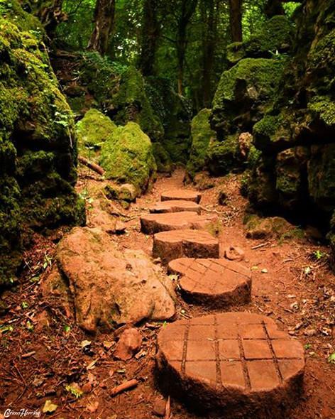 Woodland Pathway