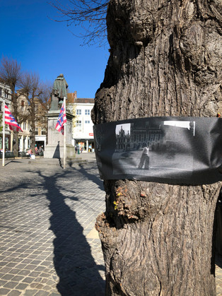 WANDERING TREES_6.jpg