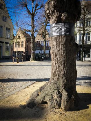 WANDERING TREES_7.jpg
