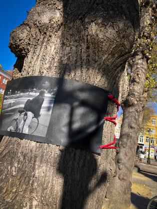WANDERING TREES_9.jpg