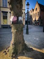 WANDERING TREES_4.jpg