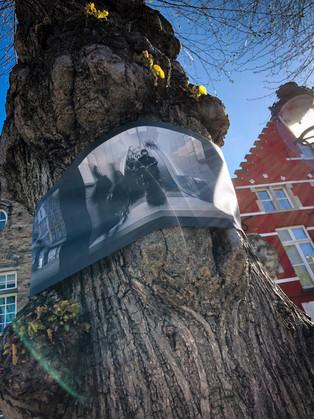 WANDERING TREES_8.jpg