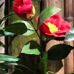 tsubaki (camellia) decor