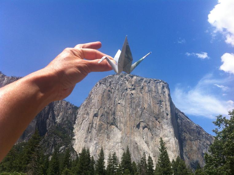 "Crane ""nest"" in Yosemite"