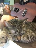 Poorly serenading my kitty Hazel