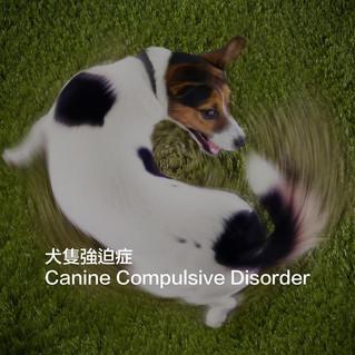 犬隻強迫症 Canine Compulsive Disorder