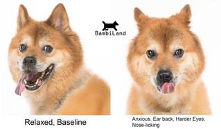 犬隻肢體語言