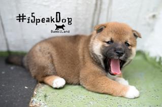幼犬 - iSpeakDog