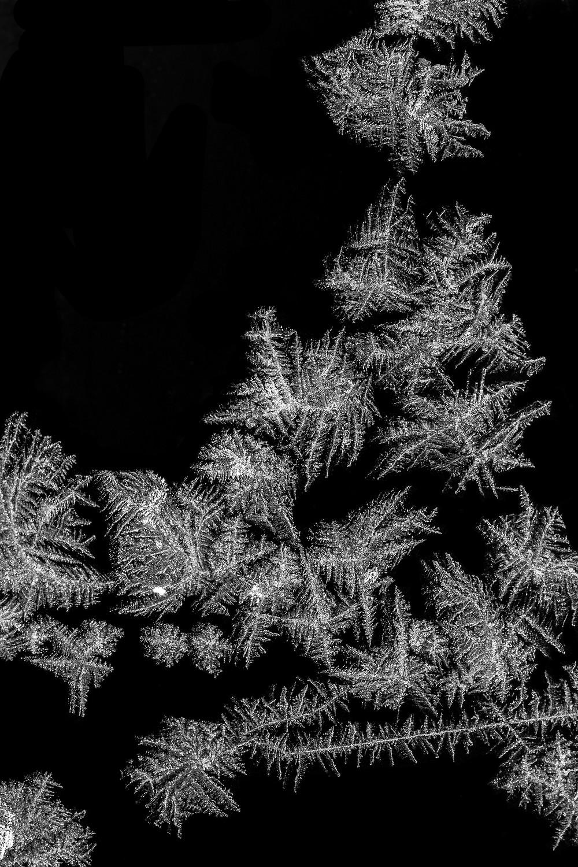 ornament by rasa g-v.jpg