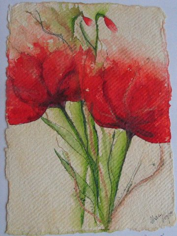 Coquelicot (Poppies)