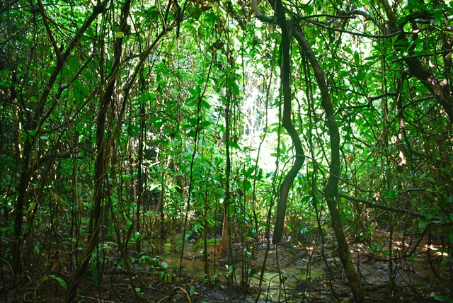 Rainforest by the sea