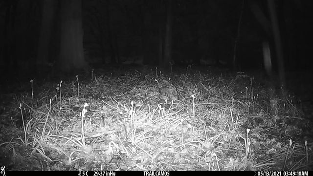 OWL with dinner