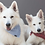 Thumbnail: Hundehalstuch / Bandana