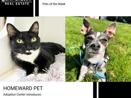 Furry Friends Friday Pet of the Week! August 6, 2021