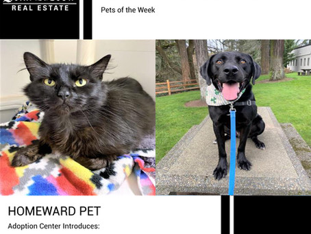 Furry Friends Friday Pet of the Week! July 9, 2021