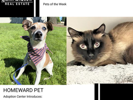 Furry Friends Friday Pet of the Week! July 16, 2021