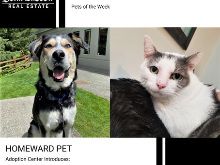Furry Friends Friday Pet of the Week! July 30, 2021