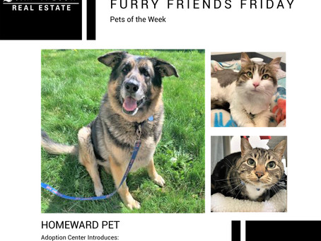 Furry Friends Friday Pet of the Week! May 7, 2021