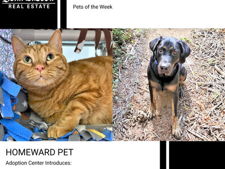 Furry Friends Friday Pet of the Week! August 13, 2021